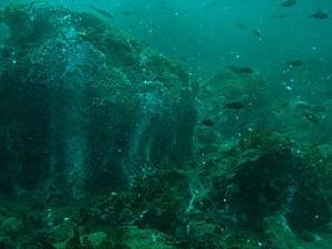 smokey reef